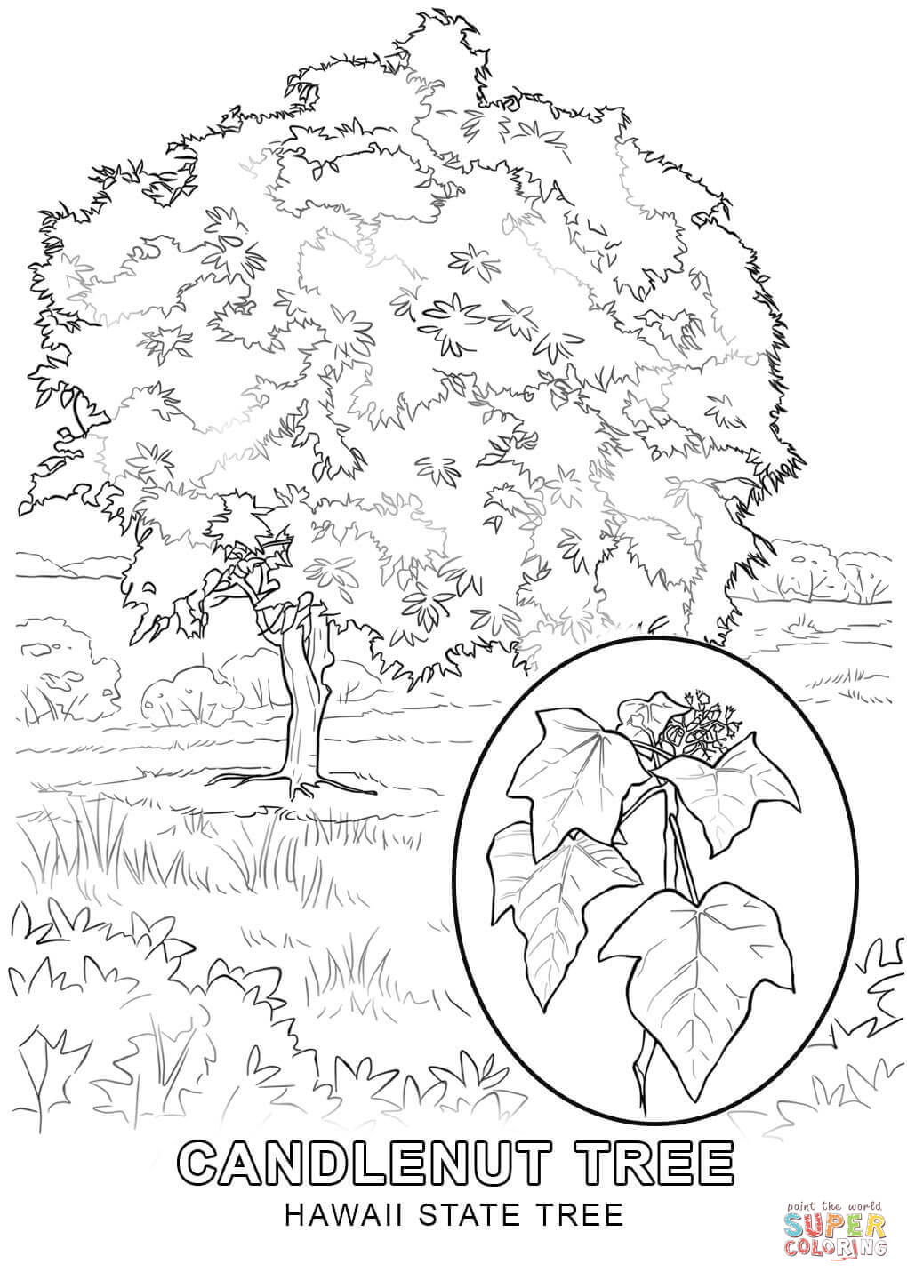 1020x1440 Hawaii State Tree Coloring Page Free Printable Coloring Pages