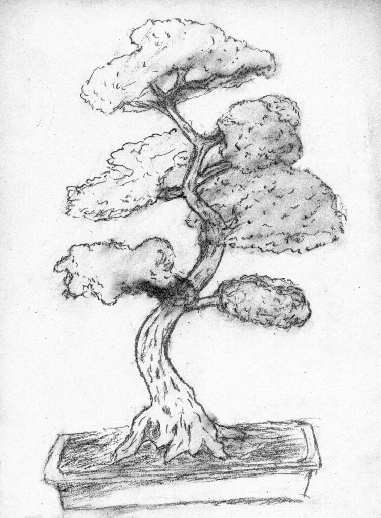 753x1024 Bonsai Tree Drawing Bonsai Treecoipo
