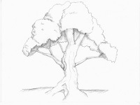 200x150 How To Sketch Trees