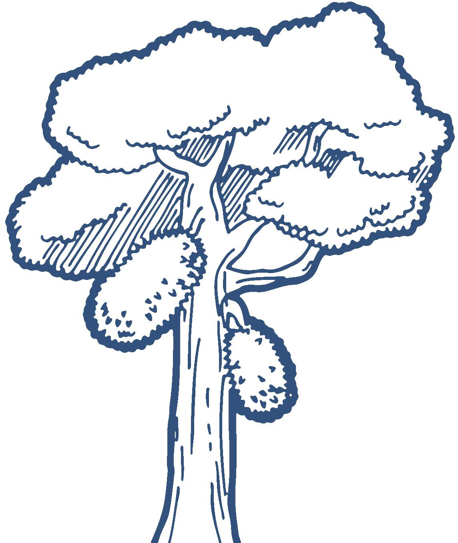 1144x1358 Jack Fruit Tree Clipart