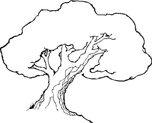 490x397 Tree Drawing Clip Art