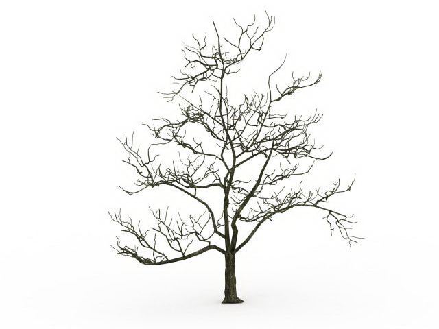 Tree Drawing No Leaves at GetDrawings com | Free for