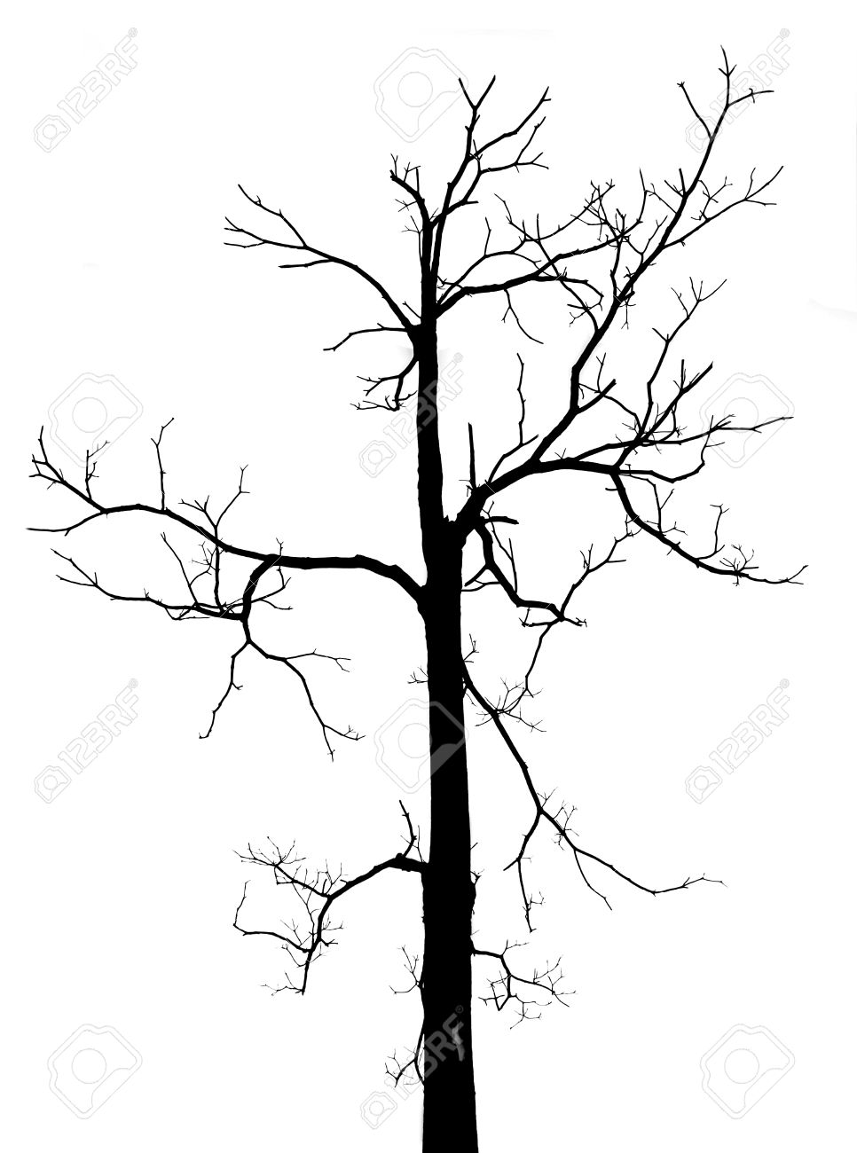966x1300 Black And White Dead Tree With No Leaves In Isolated Background