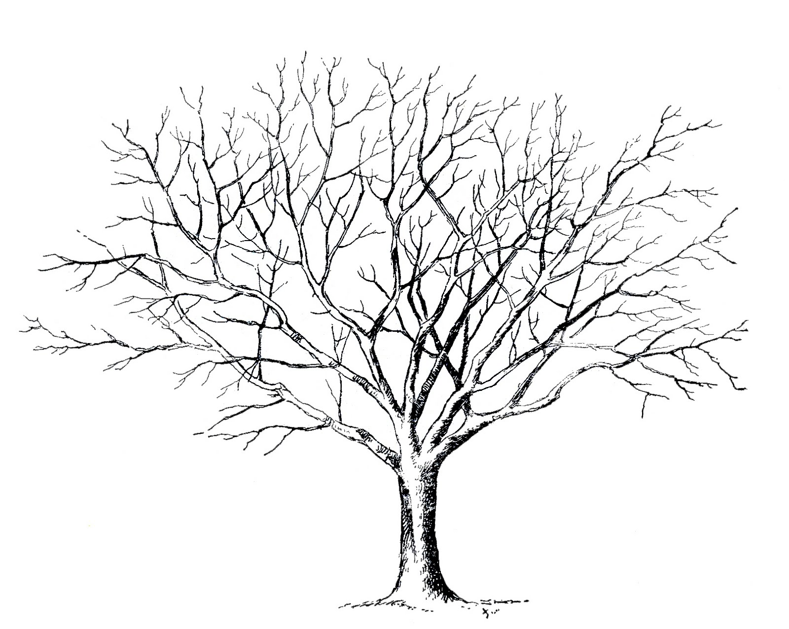 Tree template without leaves costumepartyrun tree drawing no leaves at getdrawingscom free for maxwellsz