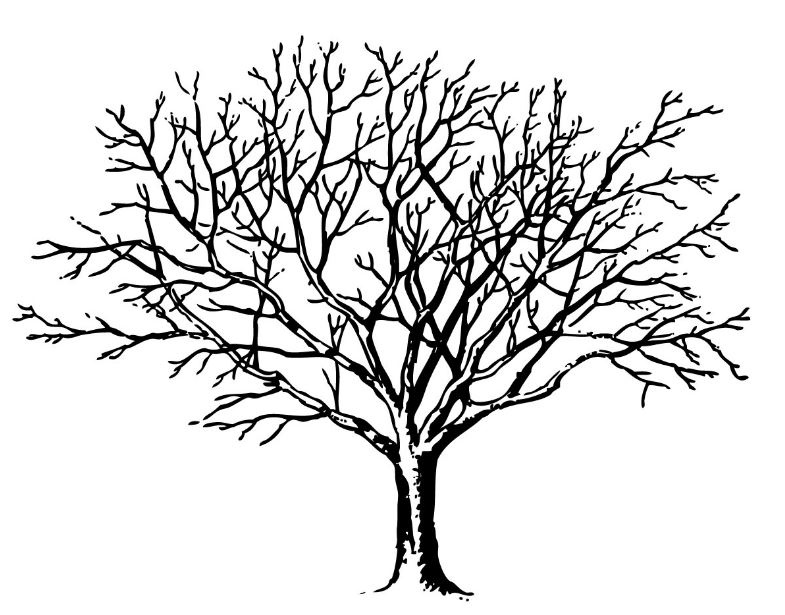 785x615 Top 20 Tree Clipart Black And White Free Download For Art Work