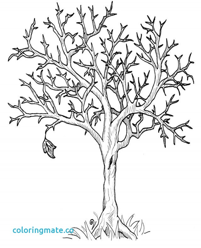 640x790 Tree Printable Coloring Page Awesome Fall Tree Coloring Page Free