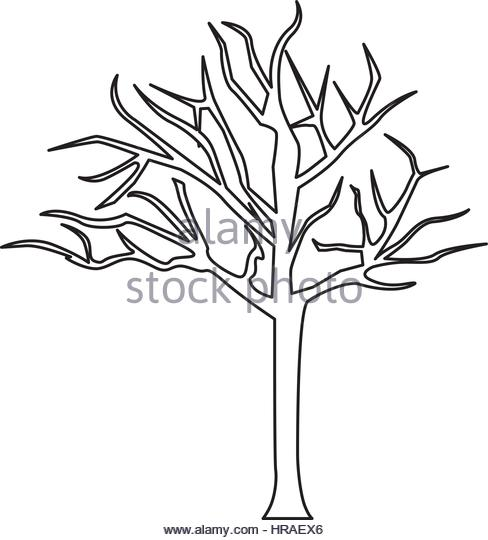 488x540 Tree Without Leaves Landscape Stock Photos Amp Tree Without Leaves