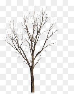 260x330 Withered,no Leaf, Withered, No Leaf, Trees Png Image For Free Download