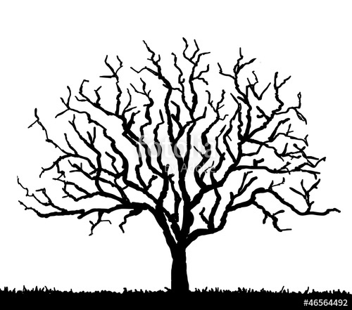500x441 Black Tree Silhouette With No Leaves, Vector Illustration Stock