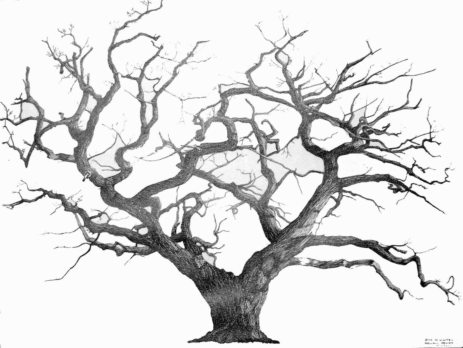 1600x1204 Pin By Pauline Cook On Wall Art Wire Trees Wire Trees