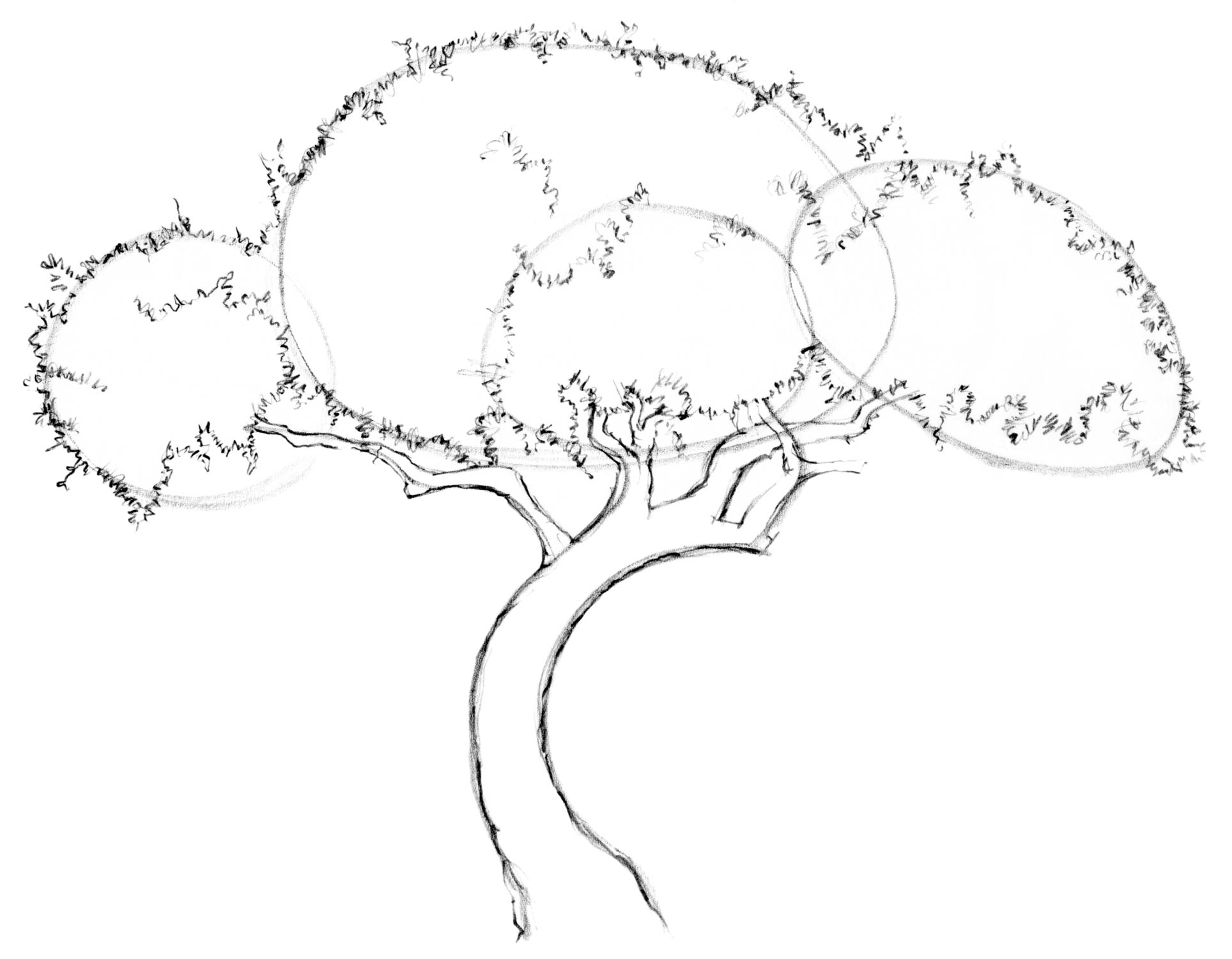 1928x1500 Drawing Lesson Tree The Scribbles Institute