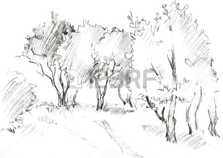 450x319 Grove Of Deciduous Trees, Painted Graphite Pencil At The White