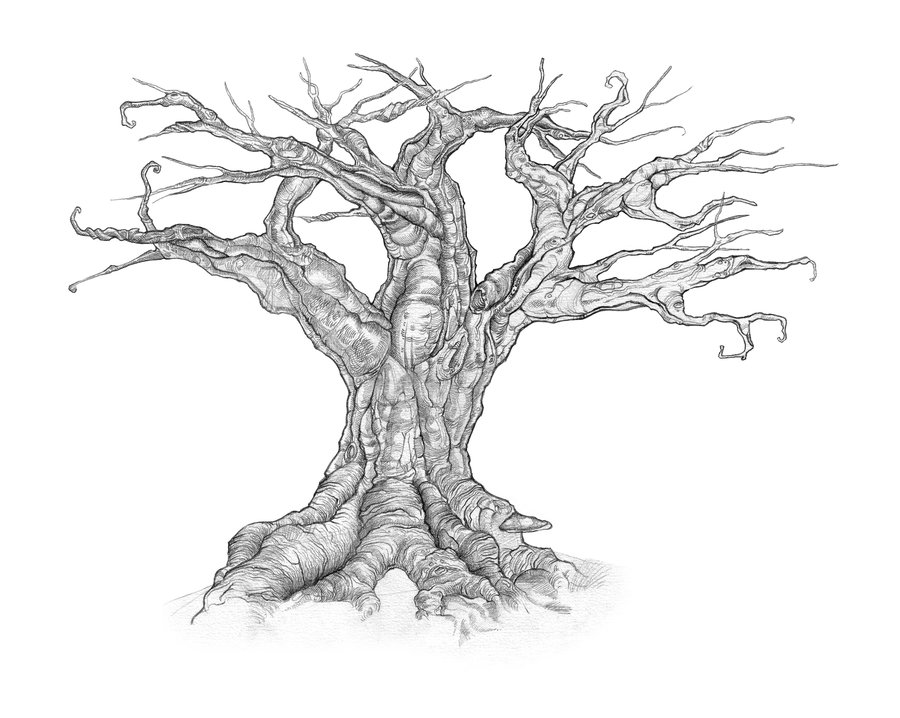 900x718 How To Draw A Dead Tree