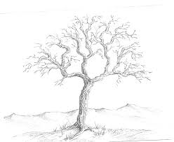 248x203 Image Result For Pencil Drawing Tree Branch How To Draw