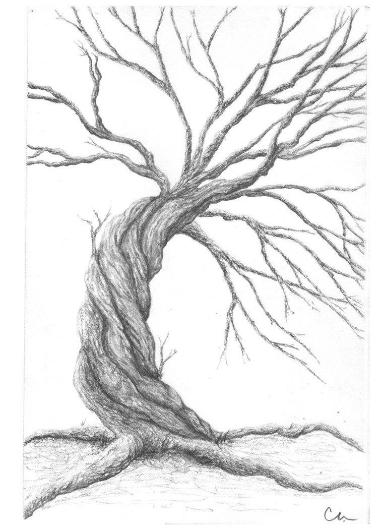 762x1049 Pencil Tree By Chocolatecovered Art