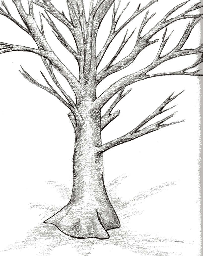 819x1032 Bare Tree By Maguppy
