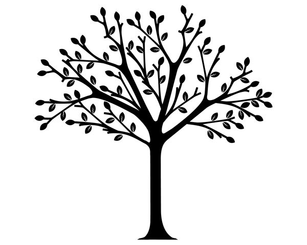 600x480 Tree Black And White Drawing Simple