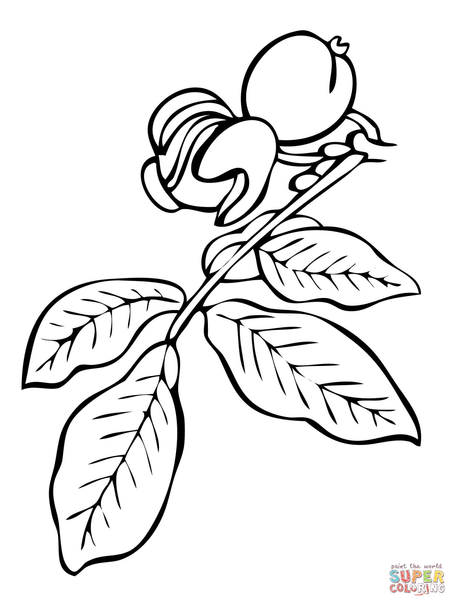 1500x2000 Walnut Tree Branch Coloring Page Free Printable Coloring Pages