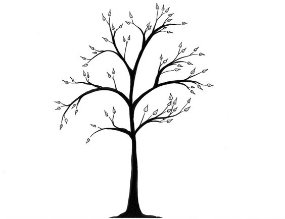 564x434 Drawing Tree. Draw Tree Trunk. Simple Drawing Of A Tree Vector