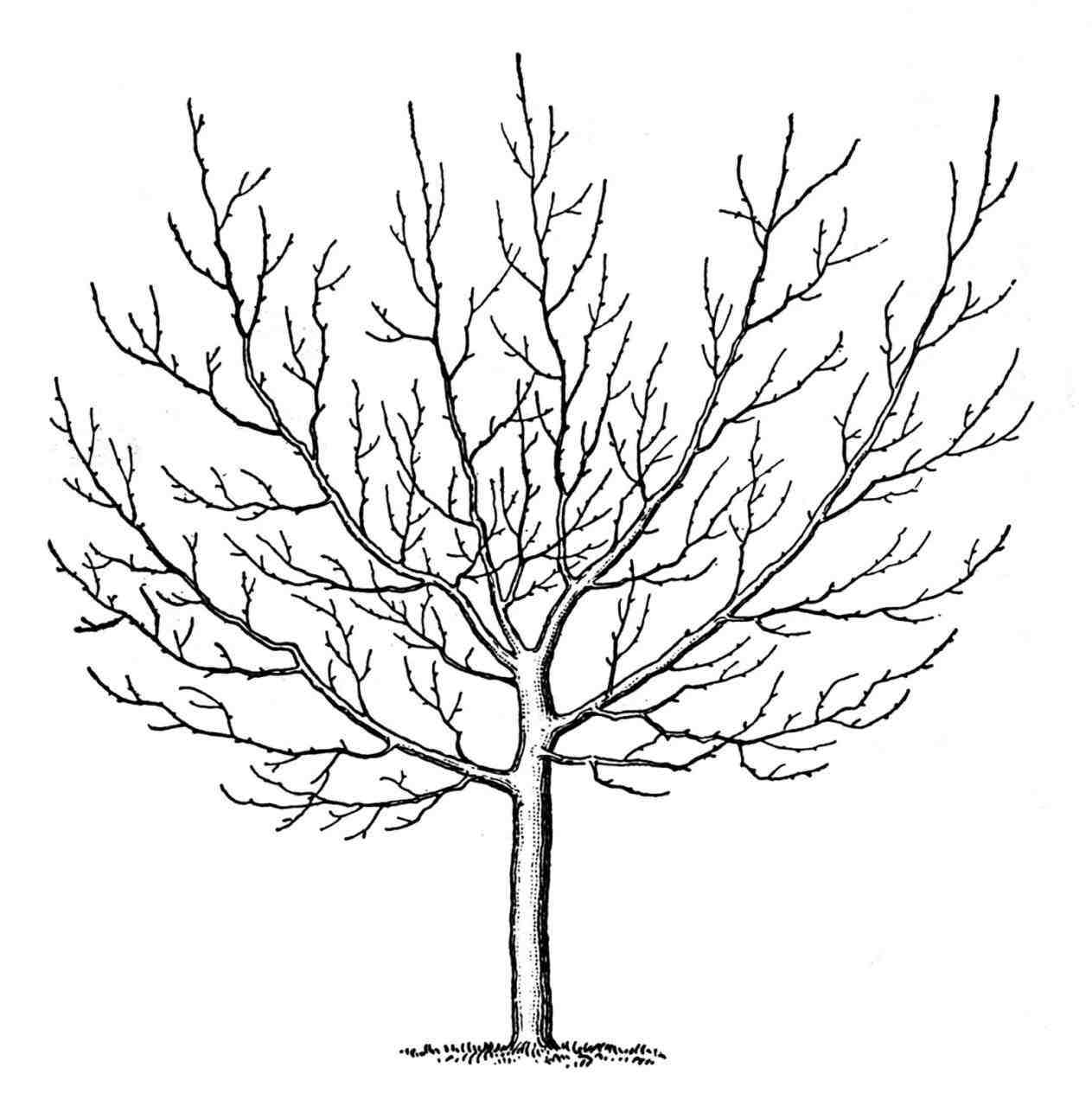 1263x1264 Simple Black And White Tree Drawings