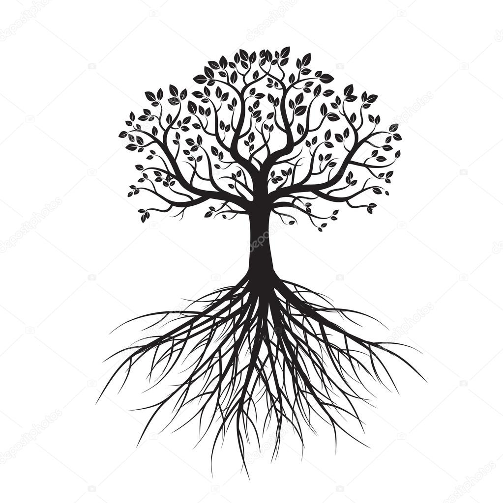 1023x1024 Shape Of Tree And Roots. Vector Illustration. Stock Vector