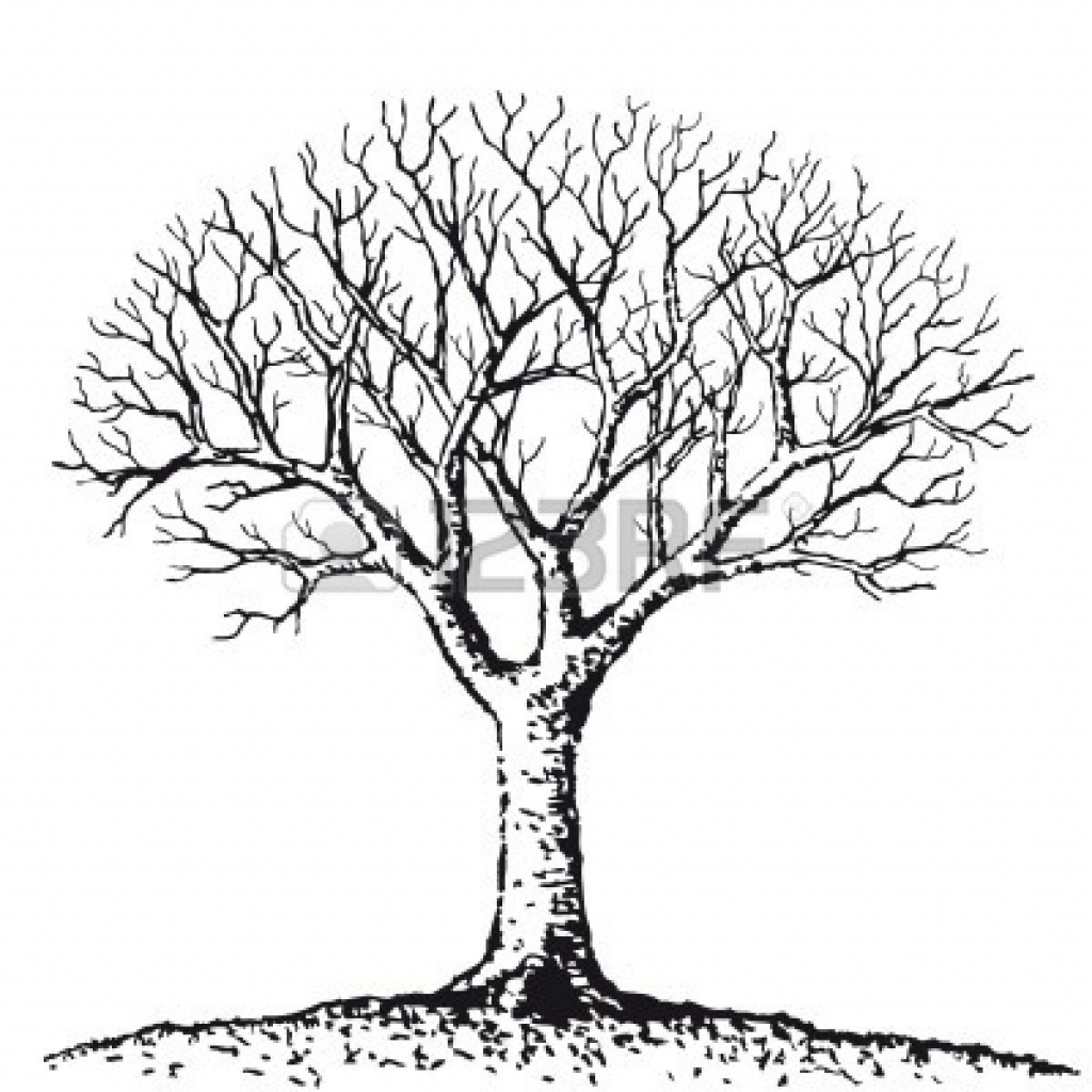 1024x1024 Simple Tree Drawing Simple Drawing Of A Tree Simple Tree Drawing