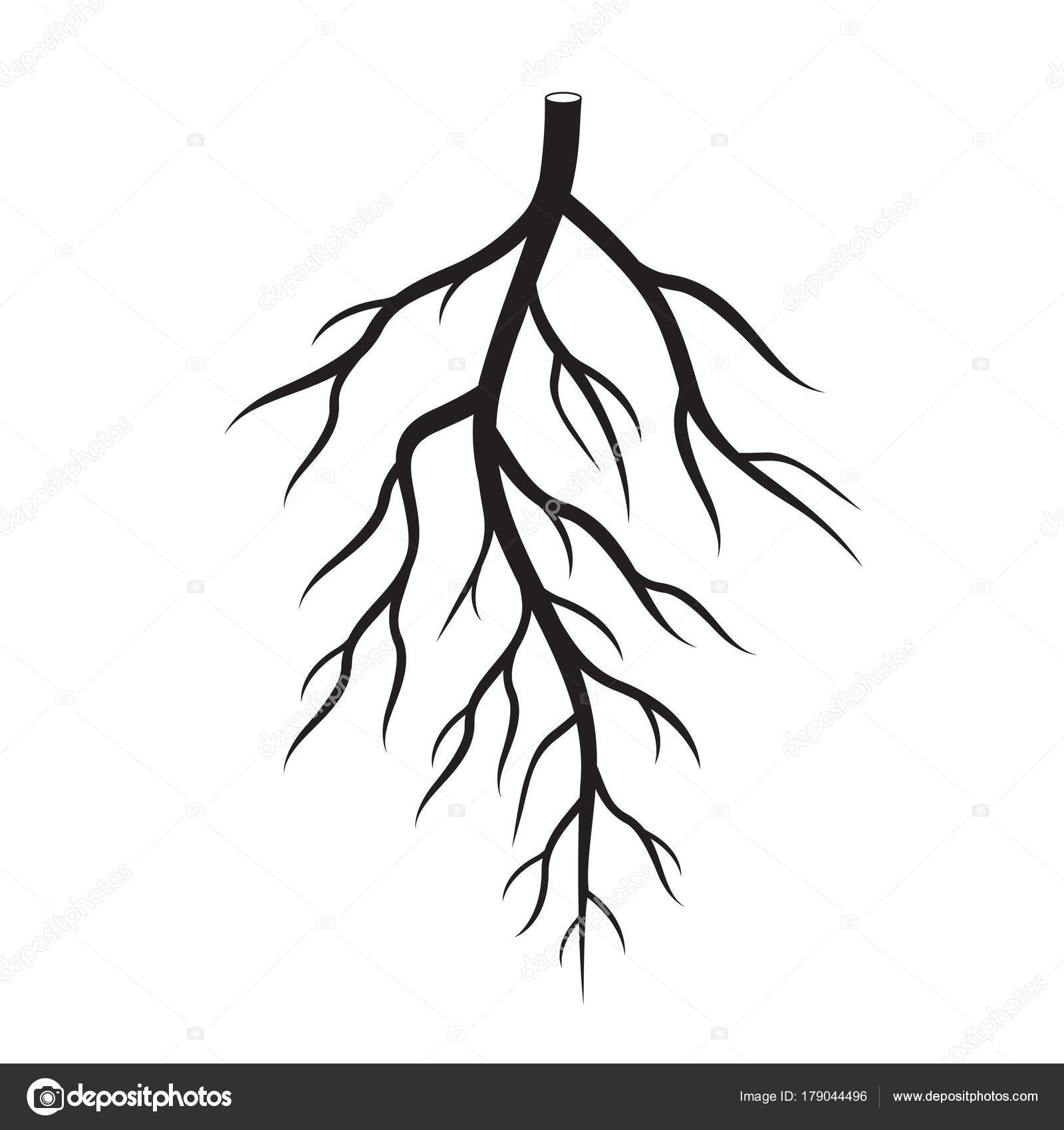 1600x1700 Black Roots Tree. Vector Illustration. Stock Vector