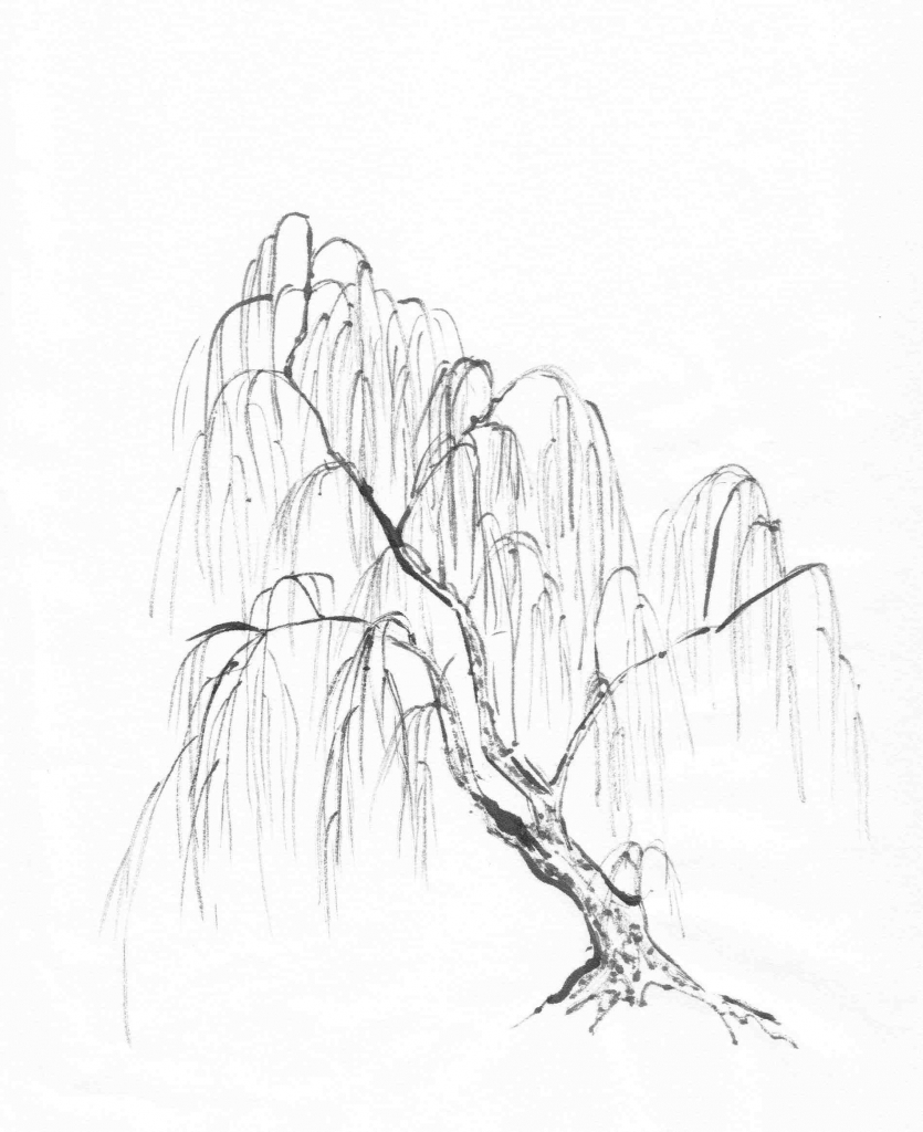 835x1024 Willow Tree Drawing Willow Tree Drawing With Roots Ngorongclub