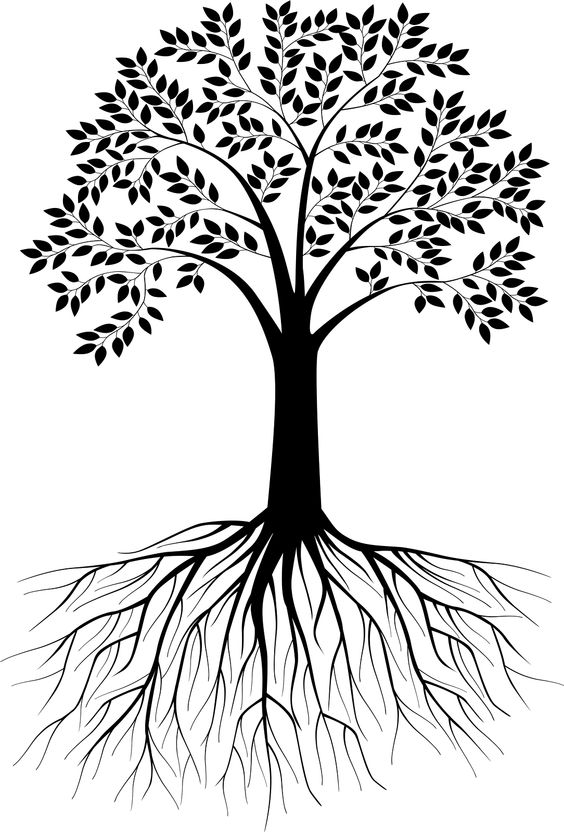 564x832 Roots From A Tree On A Poster Board Clipart