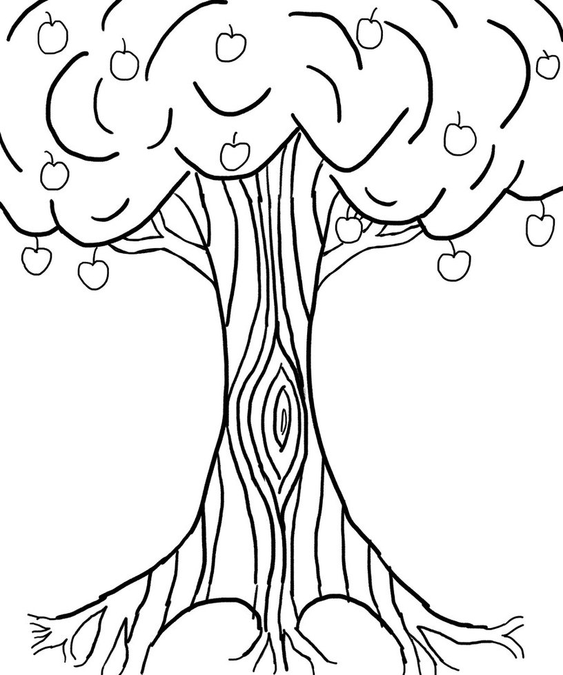 816x979 Drawn Roots Apple Tree