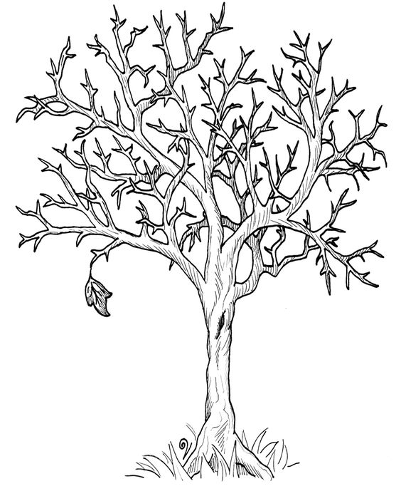 tree drawing without leaves at getdrawings com free for personal