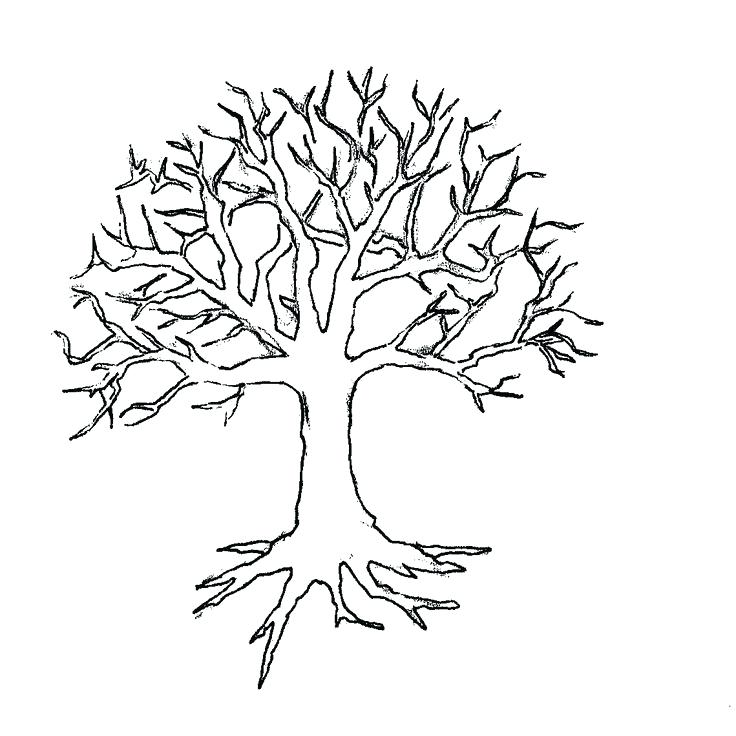 736x736 Winter Tree Coloring Page Vintage Clip