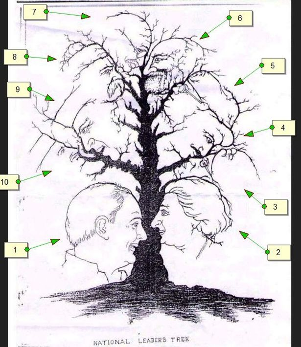 615x710 How Many Faces Can You See In This Tree Counting Conundrum Goes