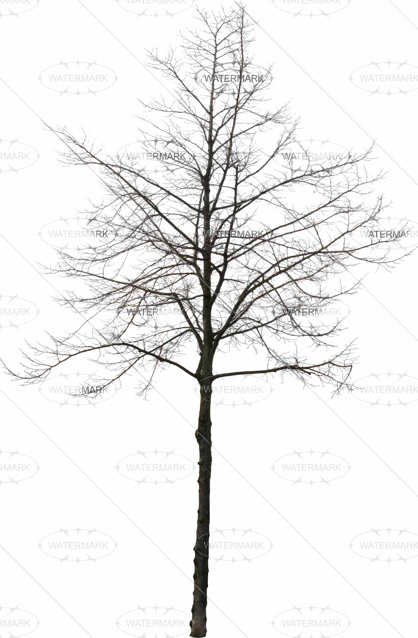 Tree In Winter Drawing