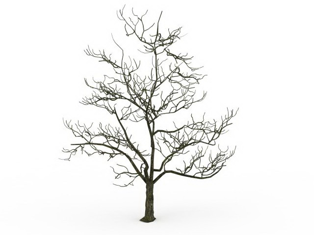 640x480 Old Tree In Winter 3d Model 3ds Max Files Free Download