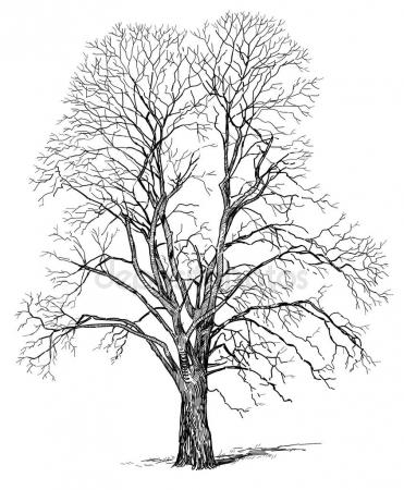 371x450 Sketch Of A Tree In Winter Stock Photo