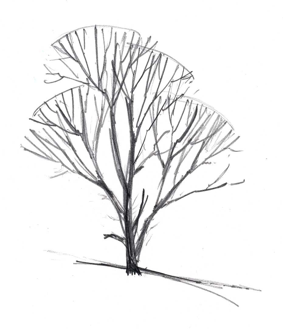 931x1080 Tree In Winter 7