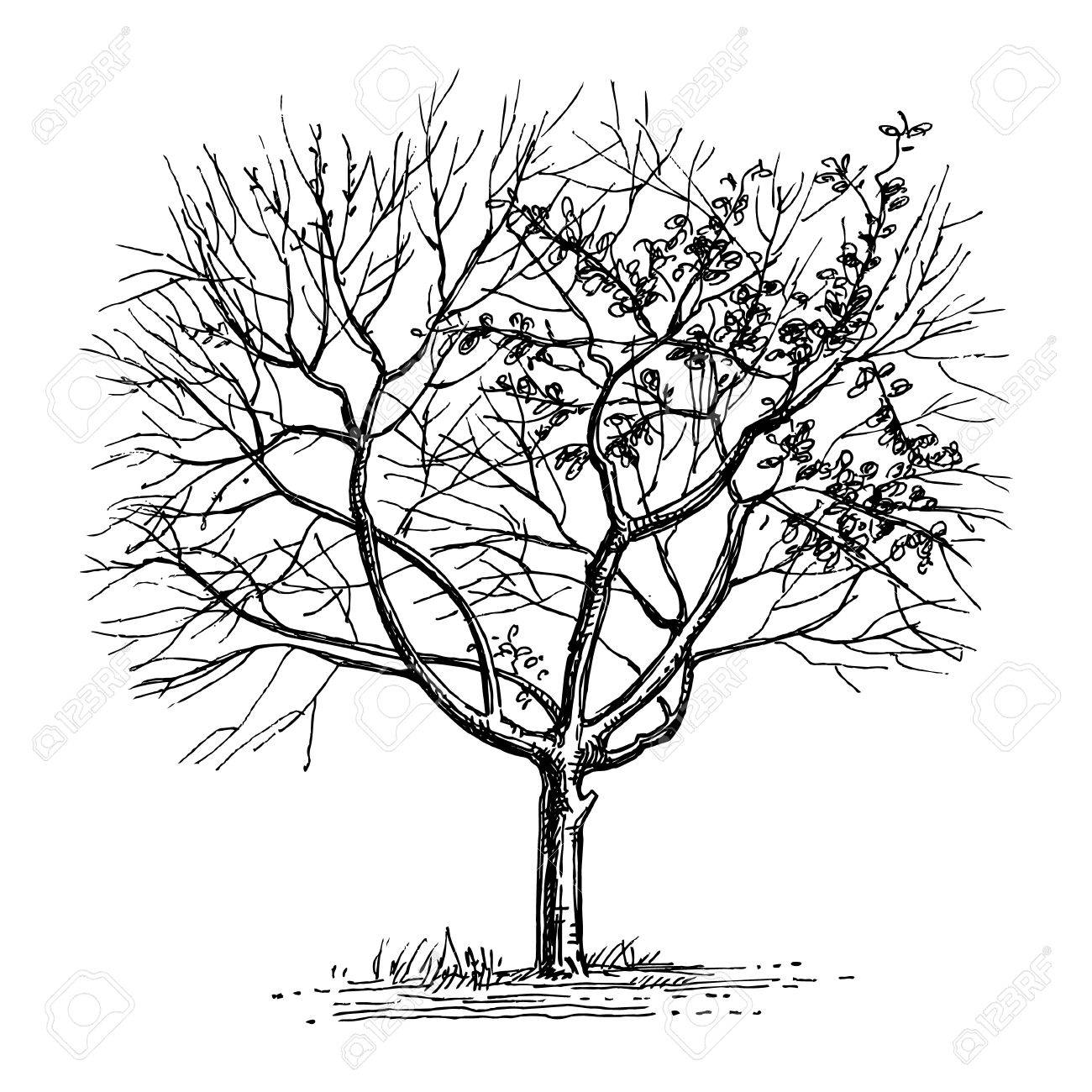 1300x1300 Ink Sketch Of Dry Tree. Royalty Free Cliparts, Vectors, And Stock