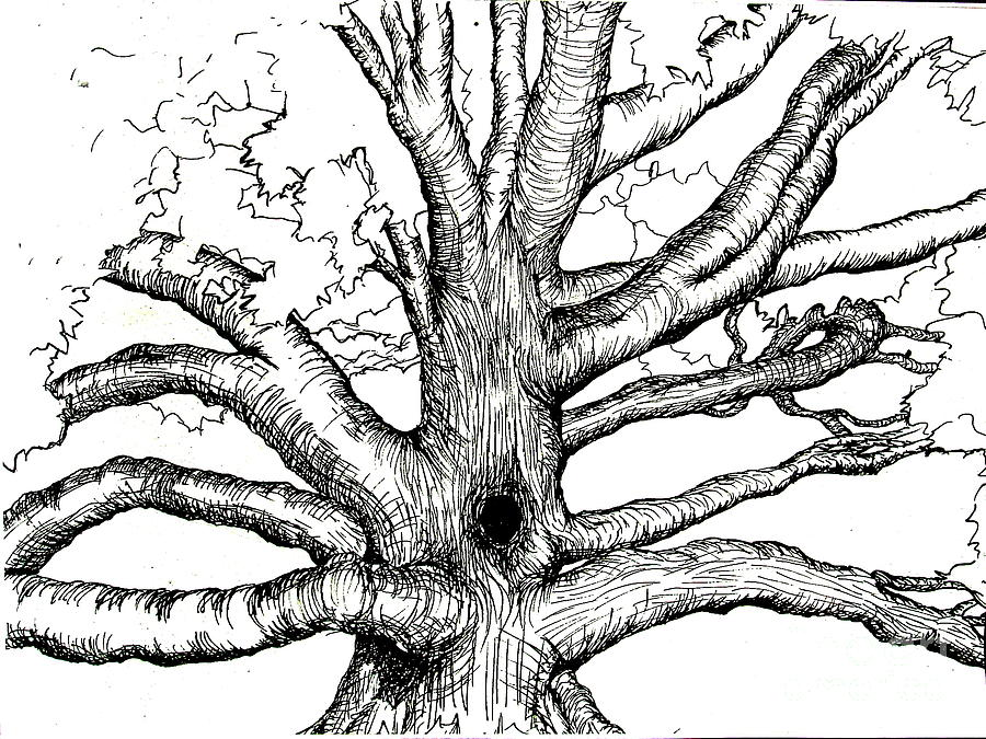 900x675 Pen And Ink Tree Painting By Joseph Hawkins Tree Planet