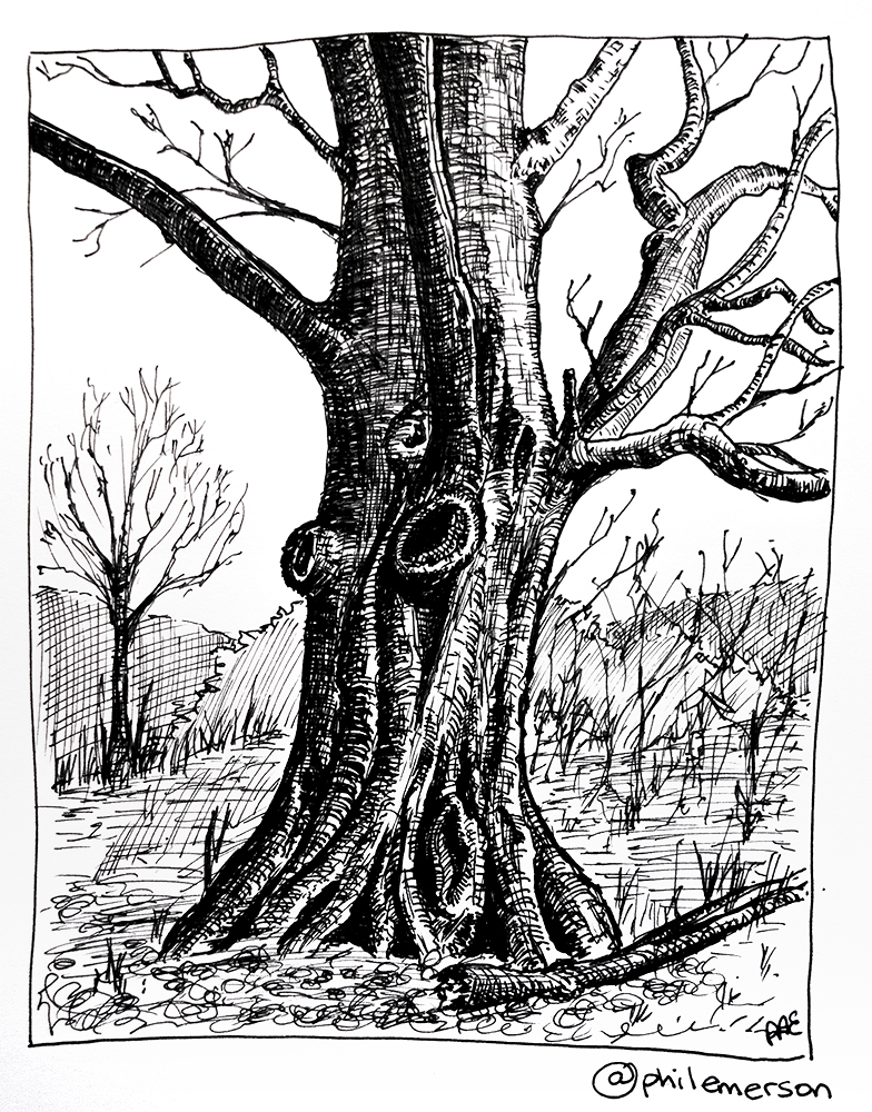 784x1000 Pen And Ink Trees ( Day
