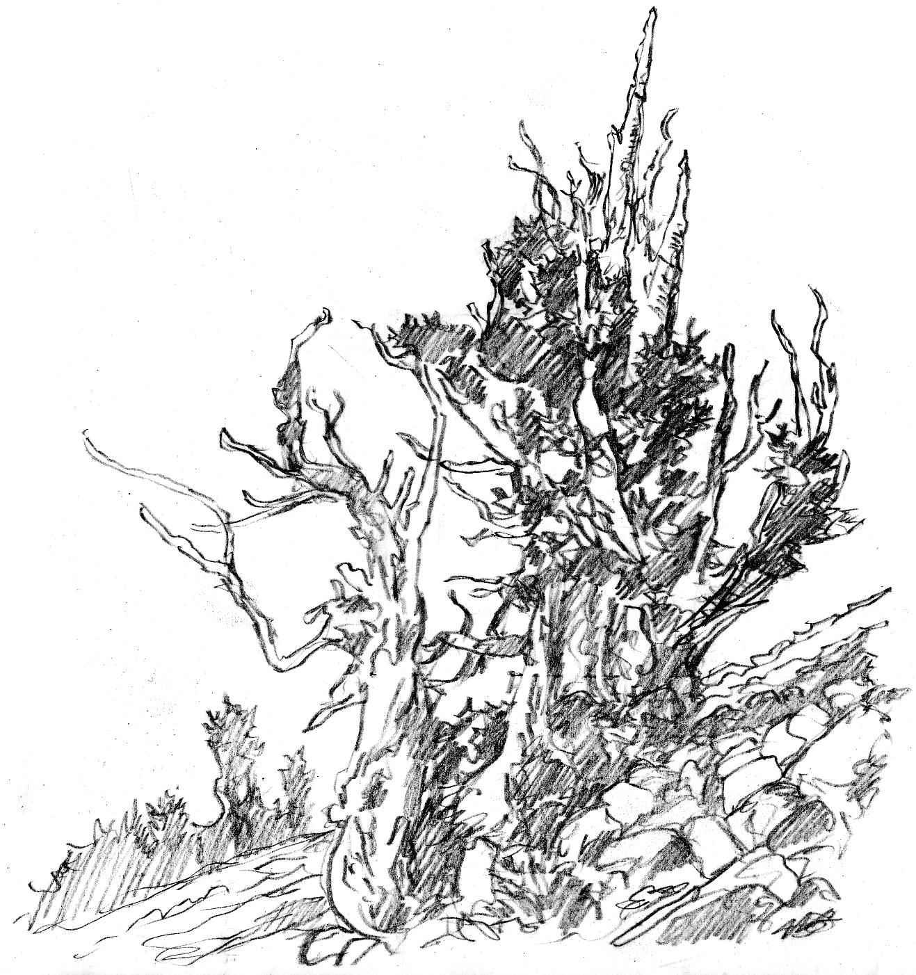 1317x1402 Bristlecone Pines The Art Of Larry Eifert