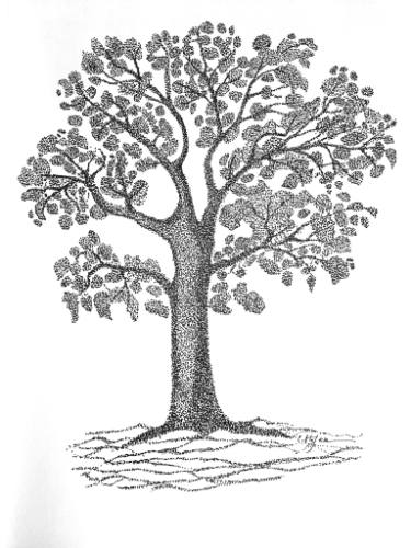 375x500 Buy Original Ink Expressionism Tree Drawings Online Saatchi Art