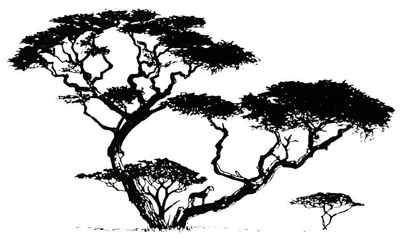 800x466 Cheetah In Tree (Pen And Ink)