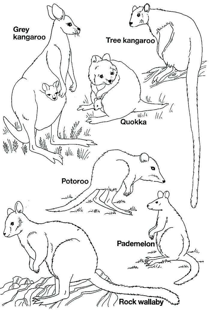 700x1033 Australian Coloring Pages Coloring Pages Coloring Pages Coloring