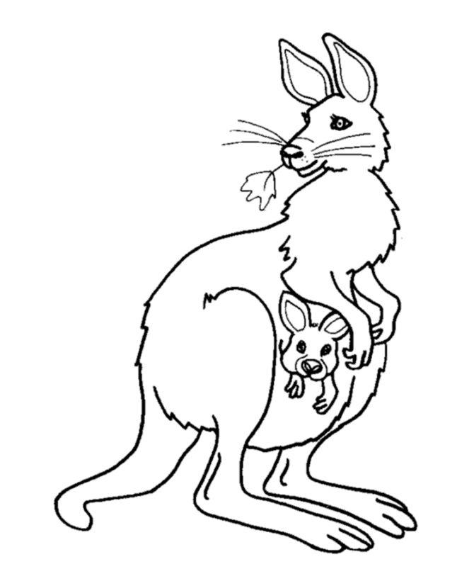 Tree Kangaroo Drawing at GetDrawings.com | Free for personal use ...
