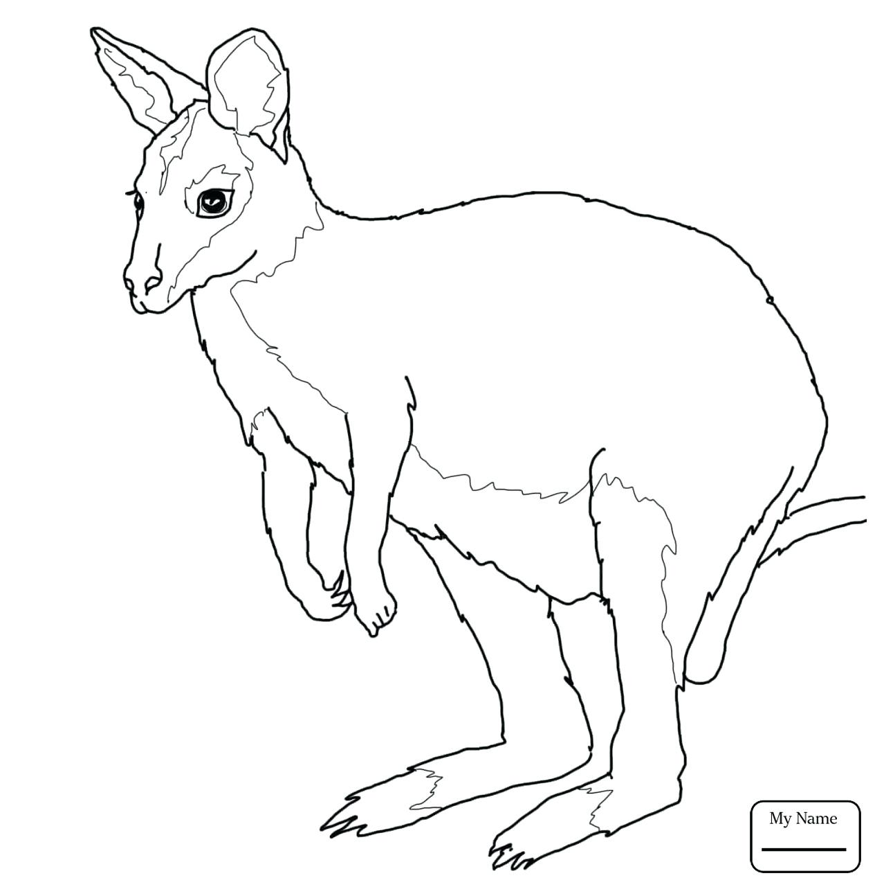 1265x1281 Coloring Kangaroo Coloring Pages Kangaroos Mammals Leaping