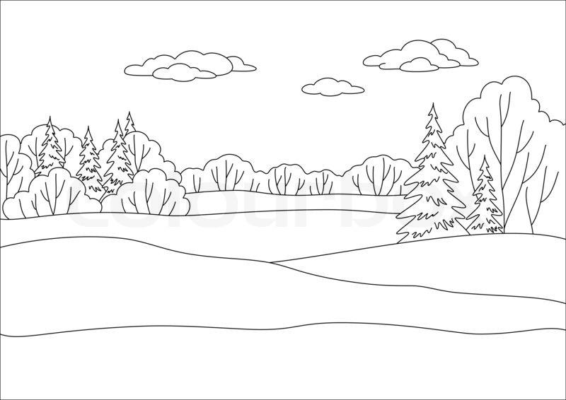 800x566 Landscape Winter Forest, Coniferous And Deciduous Trees Under Sky