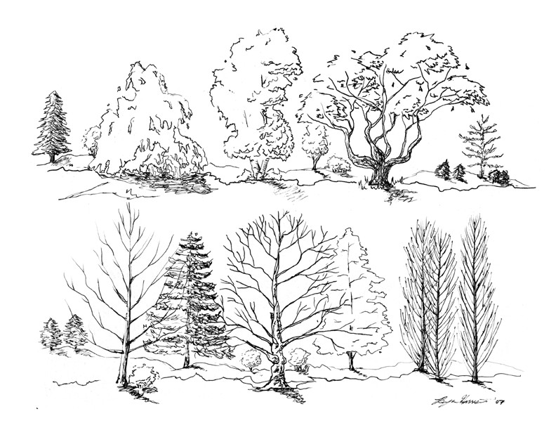 792x612 Loose Tree Sketches By On @