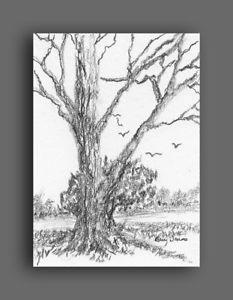 233x300 Aceo Original Tree Landscape Graphite Pencil Miniature Drawing, Us