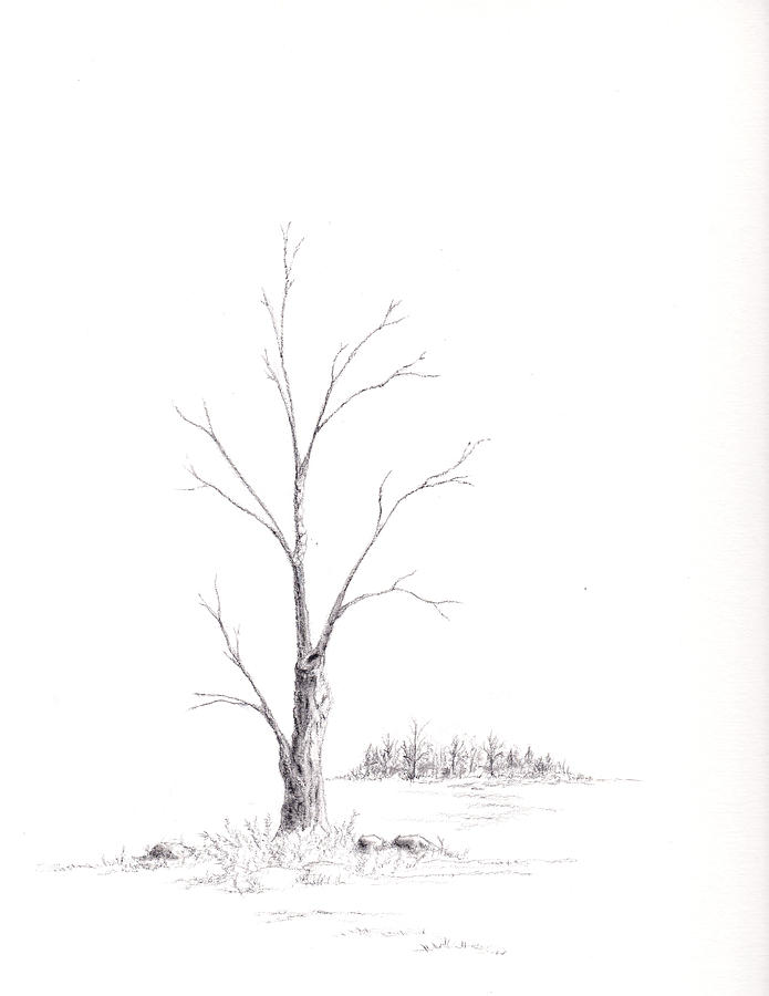 695x900 Winter's Tree Drawing By Steven Powers Smp
